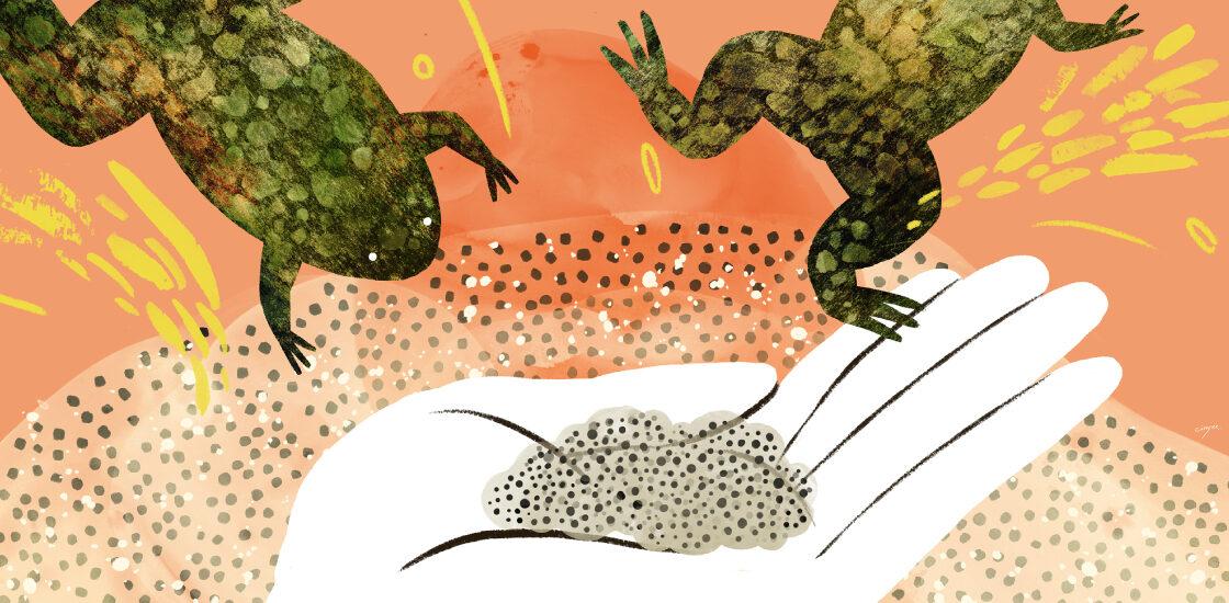 彩色插图显示一个研究人员与青蛙和青蛙蛋。