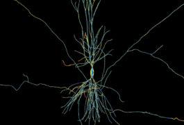Artistic interpretation of a neuron in the hippocampus.