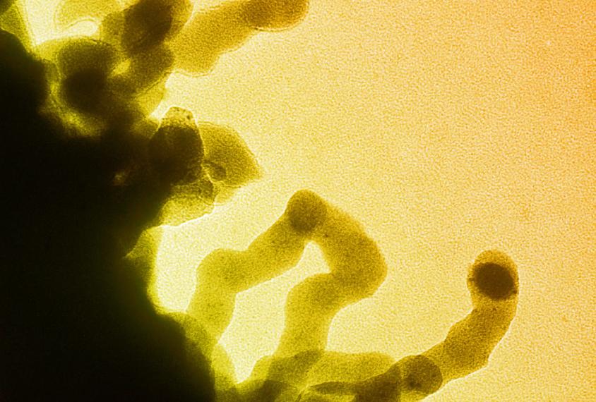Isolated chromatin