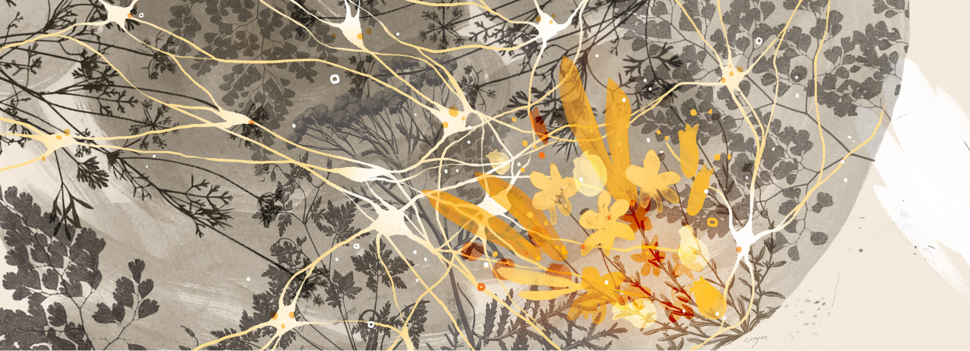 Illustration shows a closeup view of the brain with neurons and plant forms creating a semi-abstract landscape Illustration shows a closeup view of the brain with neurons and plant forms creating a semi-abstract landscape of the brain..