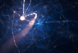 Delicate network of neurons and synapses.