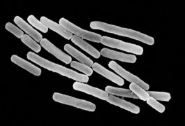 Microscope image of microbes.