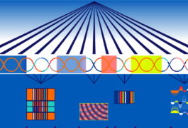 Artists interpretation of machine learning and genes
