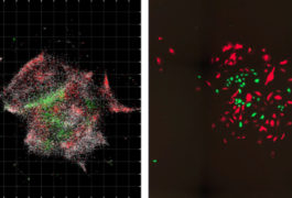 DNA microscopy images of cells glow green and red