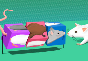 Mouse shows friendliness to all mice, friends or strangers