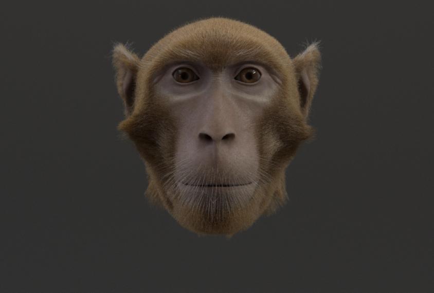 Monkey avatar face