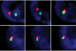 Chromosomes swapping DNA
