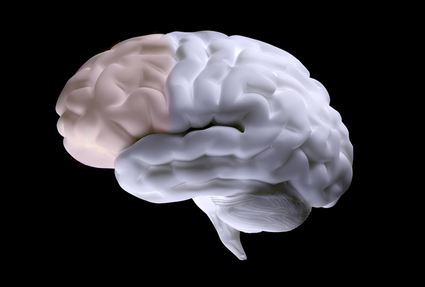 Human brain with prefrontal cortex highlighted.