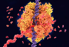 Proteins binding to RNA, illustration.