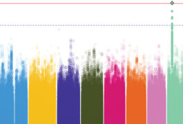 Colorful chart showing variants in chromosomes.