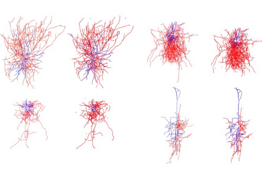 computational neural network in red and blue lines.