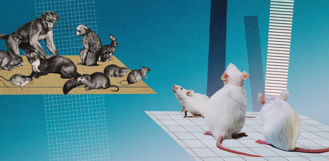 Collage illustration: Modern white lab mice look across an abyss to a cohort of historical illustrations of animals.