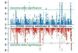 图表汇编与各种神经发育特征相关的删除和重复。
