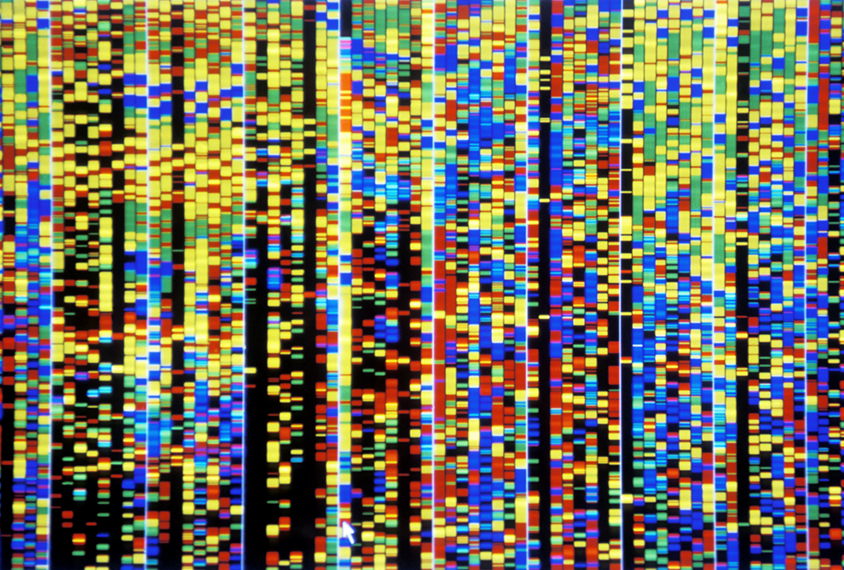Computer screenshot showing bands of colour resulting from sequenced DNA.
