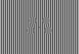 用黑白条纹4个圆圈的视觉刺激。