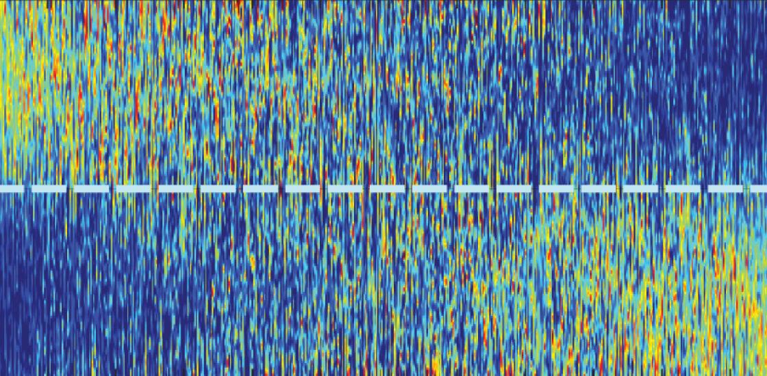 在遇到不熟悉的鼠标之前和之后,小鼠神经元记录显示出不同程度的活动水平。
