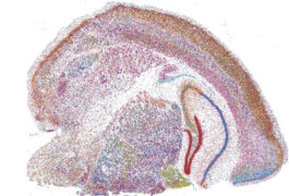 image shows slice of a mouse brain with genes highlighted
