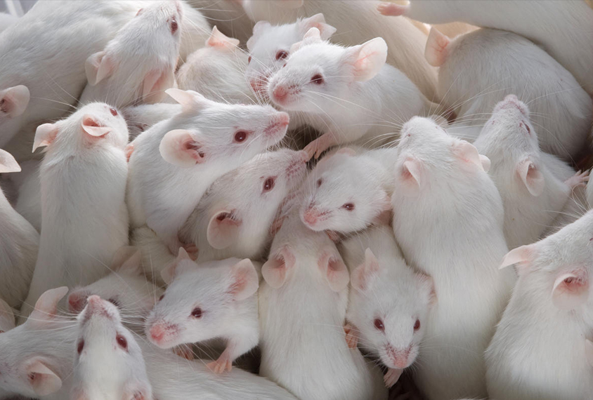Drugs boost serotonin, socialization in multiple autism mouse models