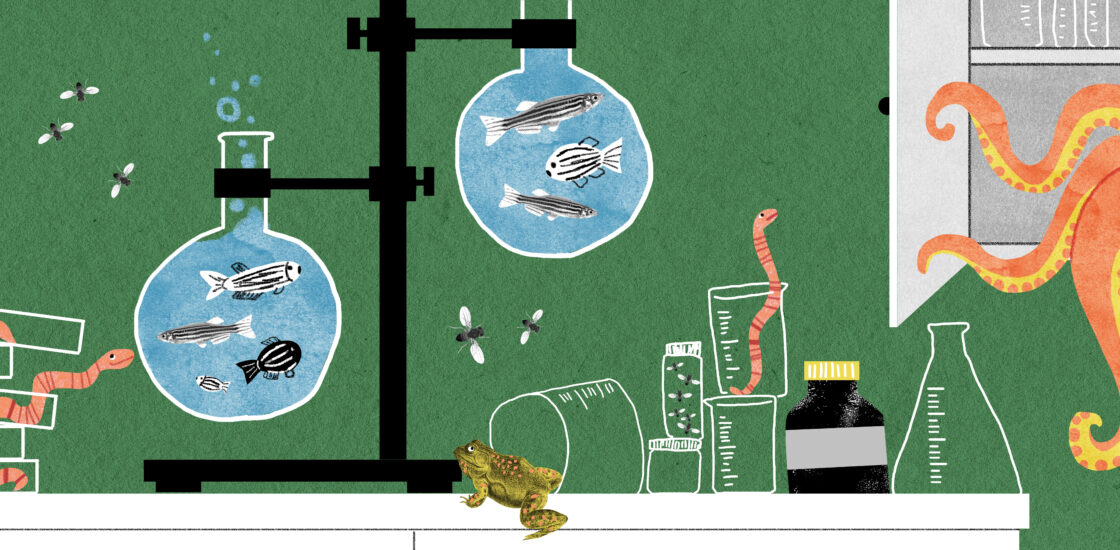 A lighthearted, colorful, chaotic lab scene with fruit flies, worms peeking out of petri dishes, zebrafish in beakers and an octopus creeping out of a cabinet..